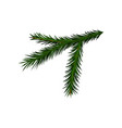 green branch of spruce or pine tree with short vector image vector image