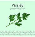 parsley image vector image vector image