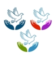 pigeon peace flying from open hands icon vector image