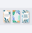 social media banner with monstera leaves palms vector image