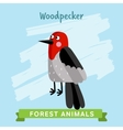Woodpecker forest animals vector image vector image