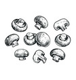 mushrooms set hand drawn sketch food concept vector image