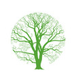 oak tree vector image