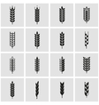 black wheat ear icon set vector image