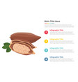 cocoa fresh fruit infographics template with 4 vector image
