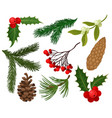 flat set of christmas plants holiday vector image