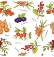 Hand drawn seamless pattern with Berries