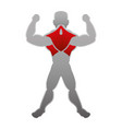 human male muscles vector image
