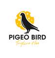 pigeon inspiration logo design vector image