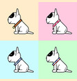 baby bull terrier vector image