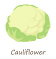 cauliflower icon isometric style vector image vector image