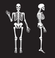 human bones skeleton silhouette anatomy of vector image