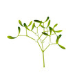 Mistletoe vector | Price: 1 Credit (USD $1)