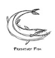 barracuda fish for your design vector image vector image