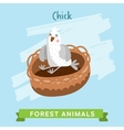 Chik forest animals vector image vector image