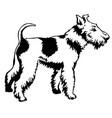 decorative standing portrait of dog fox terrier vector image vector image