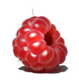 raspberry sweet fruit 3d realistic icon vector image