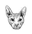 sketch portrait of bald cat vector image vector image