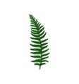 branch of green davallia fern tropical asian vector image vector image