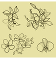 new flower set vector image vector image