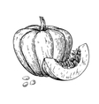 Pumpkin drawing Isolated hand drawn object vector image vector image