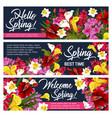 spring flower greeting banner of springtime design vector image vector image