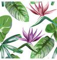 vivid strelitzia rainforest flowers foliage vector image vector image