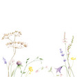 watercolor card with wildflower flowers