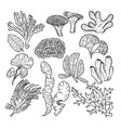 corals and underwater plants in ocean or aquarium vector image vector image