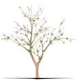 cotton tree vector image vector image
