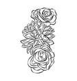 rose motif flower design elements on white vector image vector image