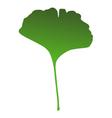 Ginkgo leaf vector image vector image