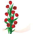 red tulip bunch vector image vector image