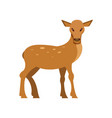 spotted fallow roe deer wild animal cartoon vector image