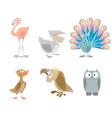 six funny birds vector image