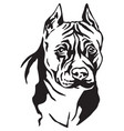 decorative portrait of dog american staffordshire vector image vector image