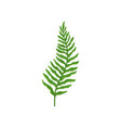 green fern twig with leaves wild forest plant vector image vector image