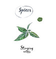 twig of green fresh stinging nettle in watercolor vector image vector image