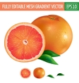Grapefruit on white background vector image vector image