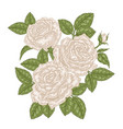 hand drawn white roses flowers and leaves vintage vector image vector image
