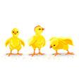 hen chicken newborn little vector image