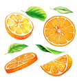 set parts orange fruit and leaves vector image vector image