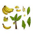 banana colorful sketch set with vector image vector image