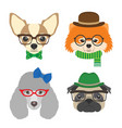 set of dogs portraits chihuahua pug poodle vector image vector image
