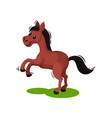 adorable brown horse standing on its hind legs on vector image vector image