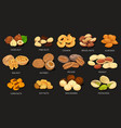 set of grains and beans of food nuts vector image vector image