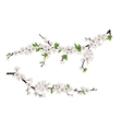 spring blooming tree branches with white flowers vector image