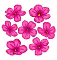 beautiful flowers set colorful floral collection vector image vector image
