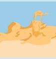 camel in a desert vector image