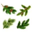 Fir and pine trees branches icons set vector image vector image